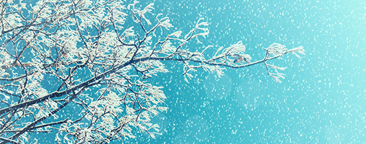 Snow Collecting on Branches in the Winter